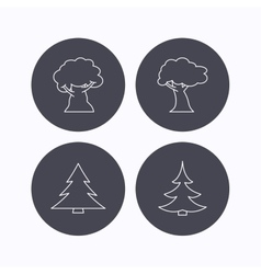 Tree oak-tree and christmas tree icons vector image