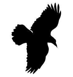 Black silhouette of raven vector
