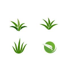 Aloe vera design vector