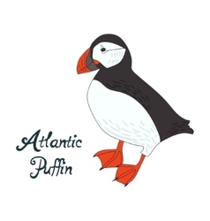 Bird atlantic puffin vector image