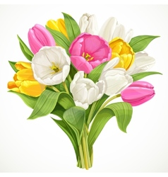 Bouquet of white tulips vector
