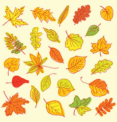 freehand drawing autumn leaves items vector image