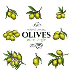 Set hand drawn olives vector