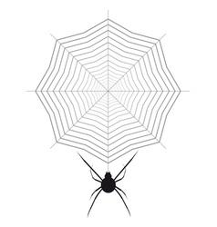 Spider and cobweb vector