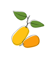 vintage style hand drawn kumquat fruits vector image vector image