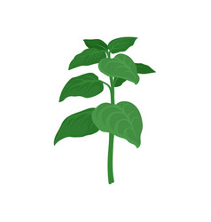 branch of oregano with green leaves aromatic vector image