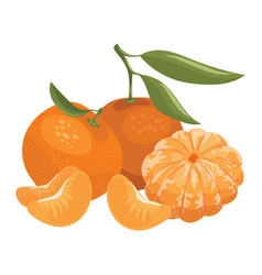 Cartoon a mandarin vector