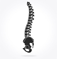 spine and pelvis side view vector image