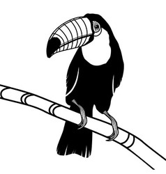 Toucan bird head for t-shirt vector image