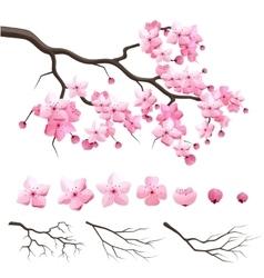 Japan sakura cherry branch with blooming flowers vector image