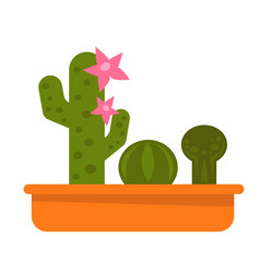 different potted cacti vector image vector image
