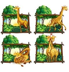 Four scenes giraffes in woods vector