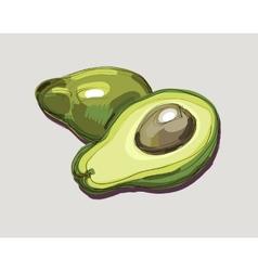 Fresh Avocado vector image
