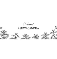 Hand drawn horizontal ashwagandha design vector