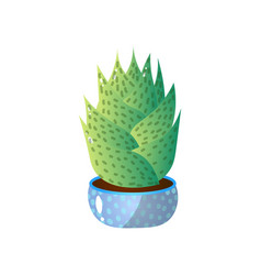 succulent green colorful in low blue pot for home vector image