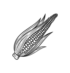 Hand drawn corn sketches on white background vector image
