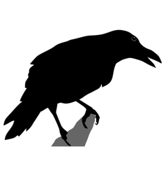 black silhouette of crow vector image vector image