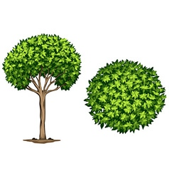 A Laurel tree vector