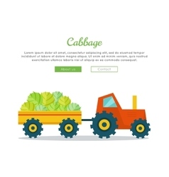 Cabbage Farm Web Banner in Flat Design vector