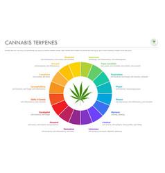 Cannabis terpenes horizontal business infographic vector