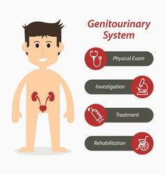 genitourinary system and medical line icon flat vector image