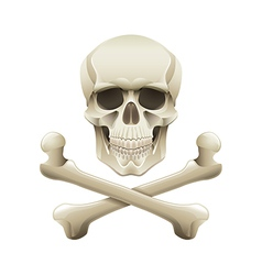 Skull crossbones isolated vector