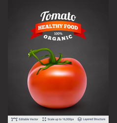 tomato and text vector image