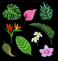 tropical plants set exotic leaves and flowers vector image