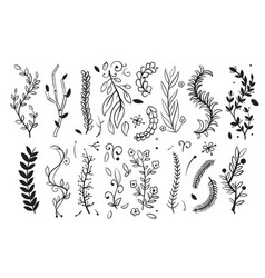 hand drawn tree wood branches boughs with leaves vector image