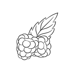 Hand drawn raspberries sketches vector image vector image