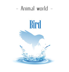 animal world bird blue bird droplet background vec vector image