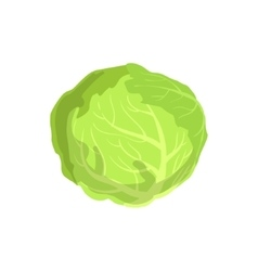 Cabbage Product Rich In Folic Acid vector image