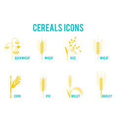 cereals icons of grain plants vector image