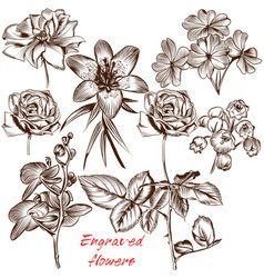 collection of engraved flowers in antique style vector image