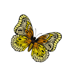 Flat of butterfly with beautiful pattern on vector
