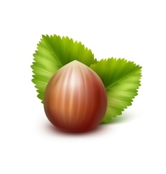 Full Unpeeled Hazelnut with Leaves on Background vector image
