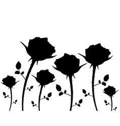 silhouettes of flowers roses on a white background vector image