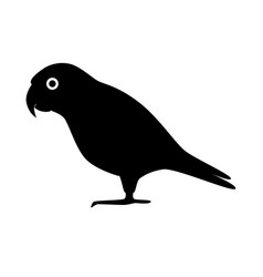 senegal parrot silhouette icon in flat style vector image