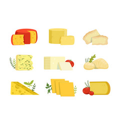 Different types of cheese pieces popular kind of vector