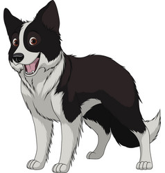 Funny purebred border collie vector