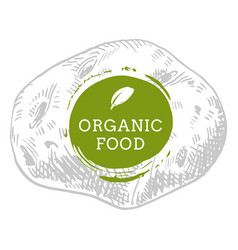 label potato fresh natural eco food hand drawn vector image