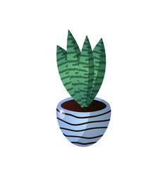 succulent striped green flower pot for room design vector image