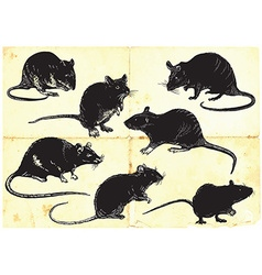rats collection freehand sketching vector image