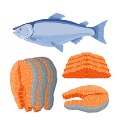 Salmon seafood fresh fish orange fillet vector