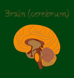 Human organ icon in flat style brain vector