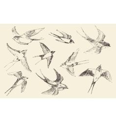 Swallows Flying Bird Hand Drawn Sketch vector image