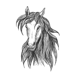 Athletic thoroughbred bay racehorse sketch symbol vector
