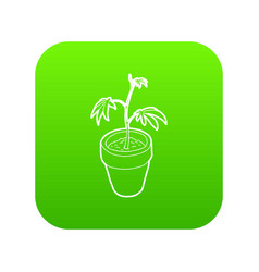 cannabis plant icon green vector image