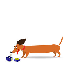 Cute cartoon long dachshund watching on gift box vector