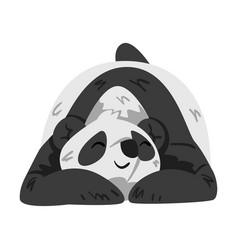 cute sleeping panda bear funny wild animal vector image